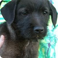 Adopt A Pet :: Jay Robb - Phoenix, AZ
