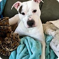 Adopt A Pet :: Mara - Salisbury, NC