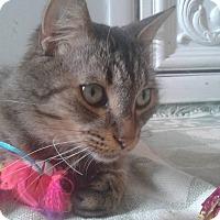 Adopt A Pet :: Max - Hanover, ON