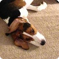 Adopt A Pet :: Jasper - N. Berwick, ME