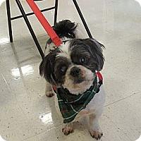Adopt A Pet :: Lucky - Ormond Beach, FL