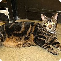 Adopt A Pet :: Tugger - Warminster, PA