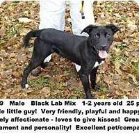 Adopt A Pet :: # 717-09 @ Animal Shelter - Zanesville, OH