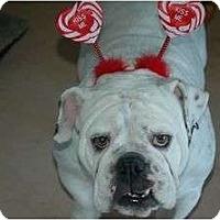 Adopt A Pet :: Stella - Dallas, TX