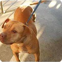 Adopt A Pet :: Mama - Justin, TX