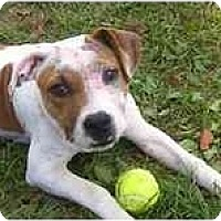 Adopt A Pet :: Chloe - Chandler, IN