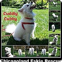 Adopt A Pet :: Cubby - Elmhurst, IL