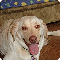 Adopt A Pet :: Prince Charlie - Huntsville, AL