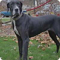 Adopt A Pet :: Duchess - Baden, PA