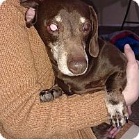 Adopt A Pet :: Keebler - Henderson, NV