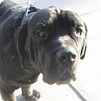 Adopt A Pet :: Pi - El Paso, TX