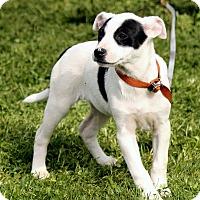 Adopt A Pet :: Tabitha - Spring Valley, NY