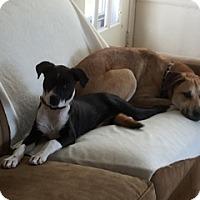 Adopt A Pet :: Monroe - Colorado Springs, CO