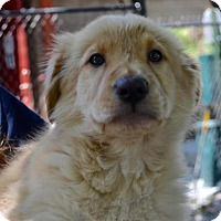 Adopt A Pet :: Jimmy - Chester Springs, PA