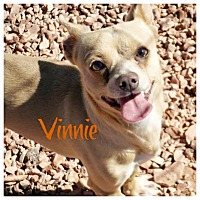 Adopt A Pet :: VINNIE - Hurricane, UT