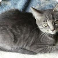 Adopt A Pet :: Ozzie - McHenry, IL