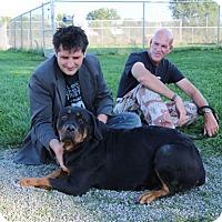 Adopt A Pet :: Emma - Elyria, OH