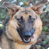 Adopt A Pet :: Joleen - Goleta, CA