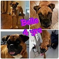 Adopt A Pet :: Belle - Jacksonville, AL