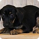 Adopt A Pet :: Jala ADOPTION PENDING