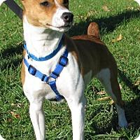 Adopt A Pet :: Frito - New Kensington, PA