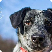 Adopt A Pet :: Bo - New Milford, CT