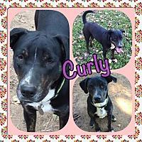 Adopt A Pet :: Curly - Ravenna, TX