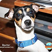 Adopt A Pet :: Baxter - South Bend, IN