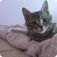 Adopt A Pet :: Napoleon - Hanover, ON