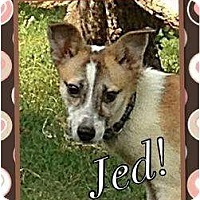 Adopt A Pet :: Jed - Somerset, TX