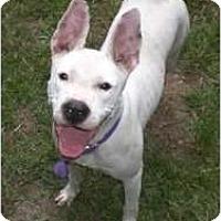 Adopt A Pet :: Bree - Douglasville, GA