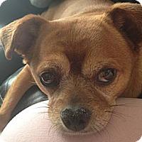 Adopt A Pet :: Cini - Van Nuys, CA