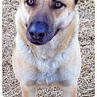 Adopt A Pet :: Jesse - Garland, TX