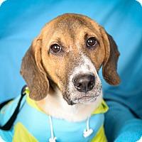Adopt A Pet :: Rory - Minneapolis, MN