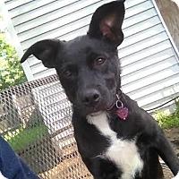 Adopt A Pet :: Pepper *Courtesy Post* - Clarkston, MI