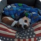 Adopt A Pet :: Evie