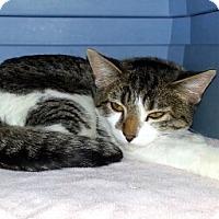 Adopt A Pet :: Nina - Gilbert, AZ