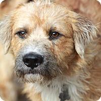 Adopt A Pet :: Clyde - Woonsocket, RI