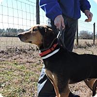 Adopt A Pet :: Major - Berkeley Heights, NJ