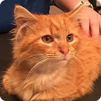 Adopt A Pet :: Finn - Covington, KY