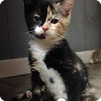 Adopt A Pet :: Pharrah - Jenkintown, PA