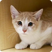 Adopt A Pet :: Magenta - Kettering, OH