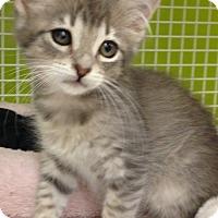 Adopt A Pet :: MoonBaby - San Antonio, TX