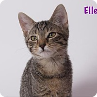 Adopt A Pet :: Elle - Baton Rouge, LA