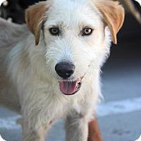 Adopt A Pet :: Marlon Brando - Adopted! - San Diego, CA