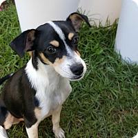 Adopt A Pet :: Lily Belle - Barnesville, GA
