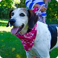 Coonhound Dog for adoption in Bowmanville, Ontario - Leia