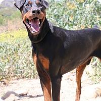 Adopt A Pet :: Duncan - Fillmore, CA