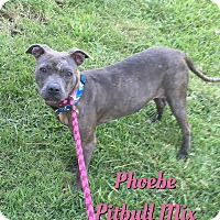 Adopt A Pet :: Phoebe - Cheney, KS