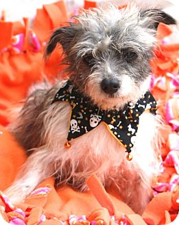 Terrier (Unknown Type, Small) Mix Dog for adoption in Woonsocket, Rhode Island - Ernestine - MEET ME
